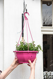 Réalisation d'une suspension fleurie dans un jardin ∞ Making of a flowered hanging basket in a garden