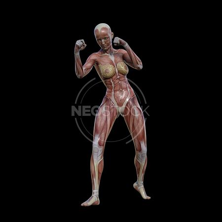 cg-body-pack-female-muscle-map-neostock-44
