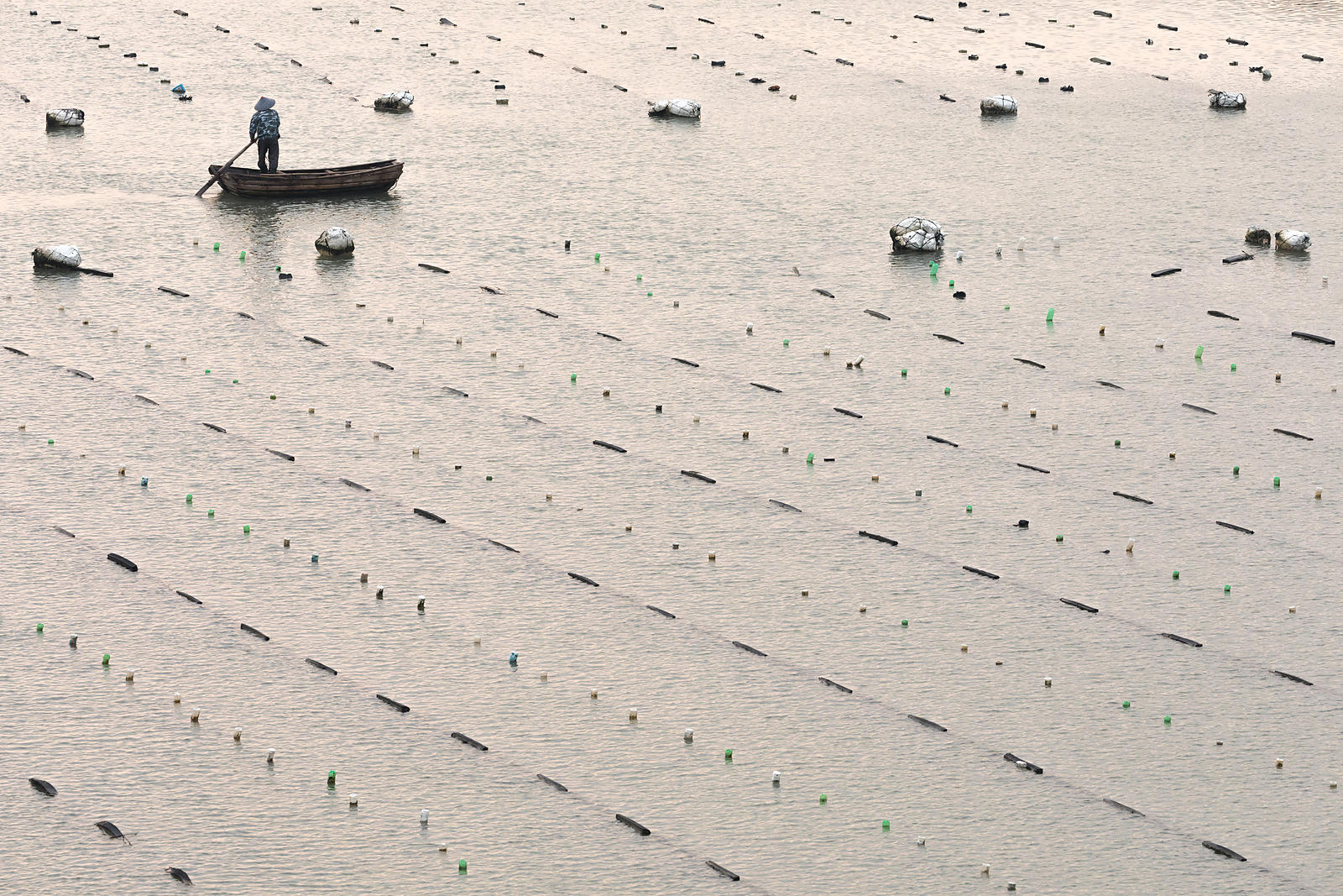 Aquaculture Patterns