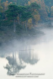 Image - Loch Affric, Highland, Scotland, Tree Reflection