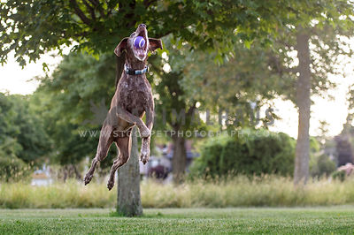 Senior dog jumping in a park