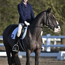 17/02/2020 - Class 2 - EHNPC dressage - Brook Farm training centre - UK