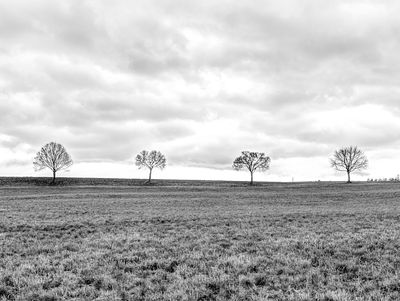 Row of trees in grass field