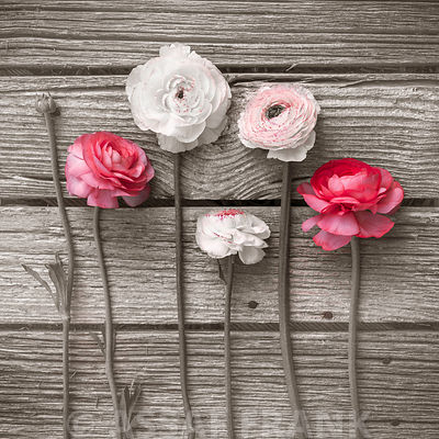 Ranunculus flowers on wooden table
