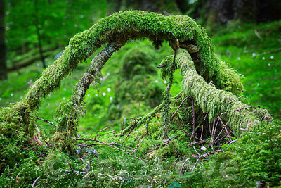 Arch formed from branches covered with moss.
