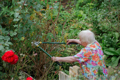 Retired old lady gardening in her back yard.