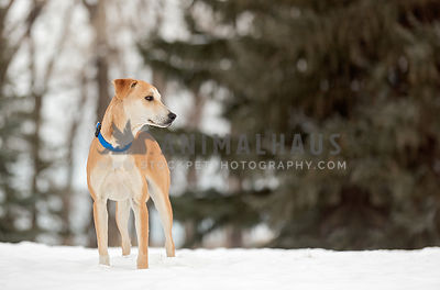 Mixed Breed Standing on Snowy Hill