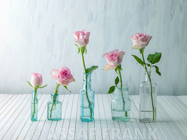 Roses in glass bottles