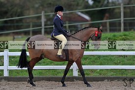 BSPS area 15 winter qualifying show. Brook Farm Training Centre. Essex. UK. 03/03/2019. ~ MANDATORY Credit Garry Bowden/Sport...