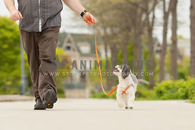 Man walking with shih tzu dog.