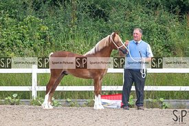 Showing. Brook Farm Training Centre. Stapleford Abbots. Essex. GBR. 23/06/2019. ~ MANDATORY Credit Elli Birch/Sportinpictures...