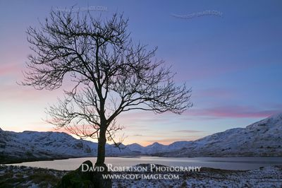 Image - Loch Arklet, tree, sunset, winter