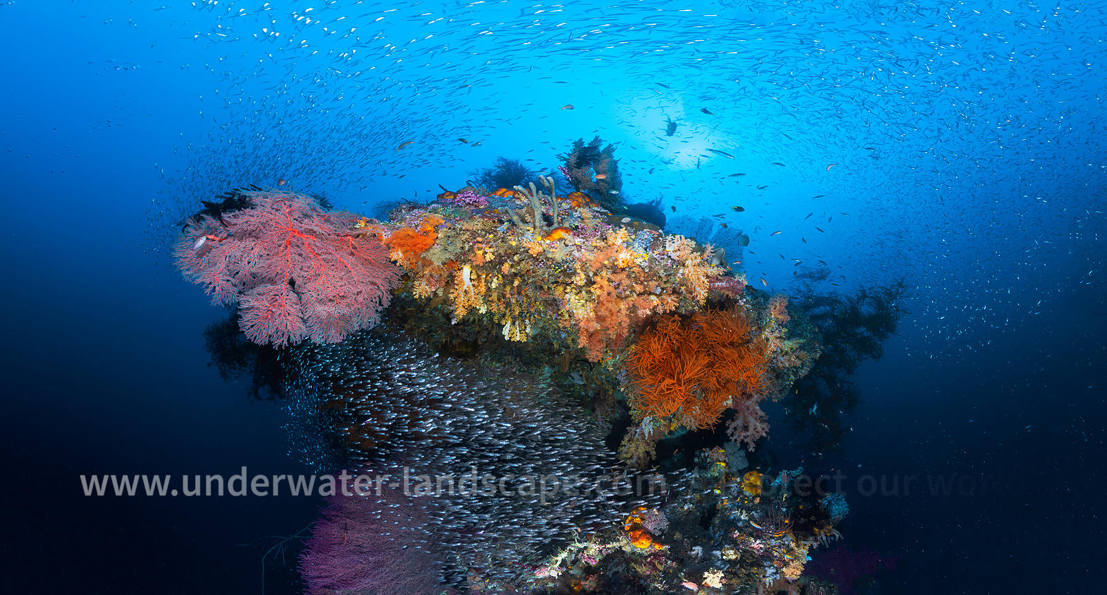 Reefs: a biodiversity concentrator
