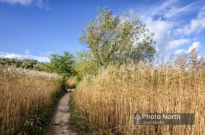 SILVERDALE 47A - Footpath through the reedbed, Leighton Moss