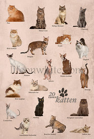Cat breeds poster in Dutch