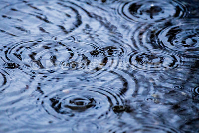 Rain Making Ripples in a Puddle