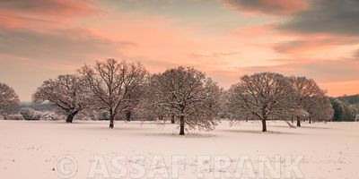 Trees in a snow covered field at dawn