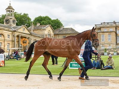 Robbie Kearns and MASTER MCCORMACK at the trot up, Equitrek Bramham Horse Trials 2019