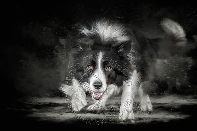 2020-Art-Digital-Alain-Thimmesch-Chien-24