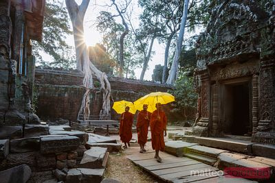 Buddhist monks walking with umbrella in a temple, Cambodia