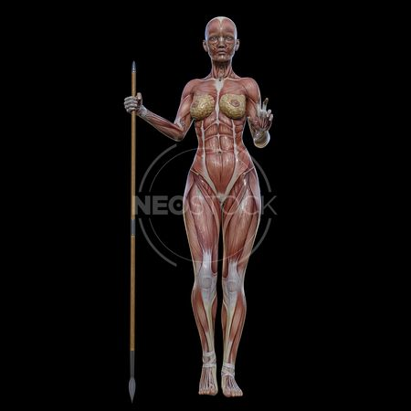 cg-body-pack-female-muscle-map-neostock-11