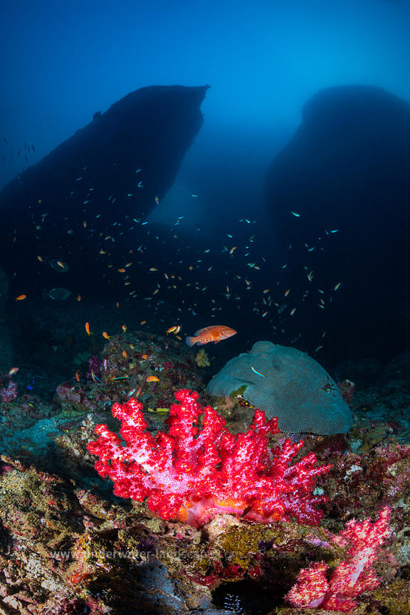 Reefscape from Similan
