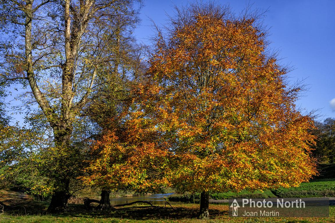 LEVENS 12A - Autumn colours, Levens Park