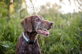 Senior dog looking away and smiling