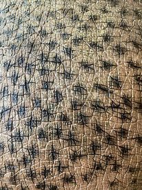Close-up of a hippo skin, textured animal background