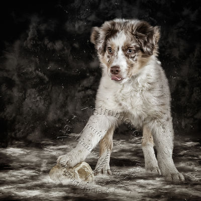 Art-Digital-Alain-Thimmesch-Chien-858