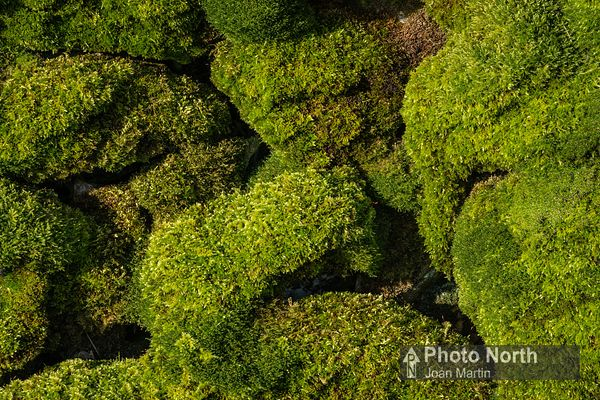 MOSS 52A - Moss-covered wall