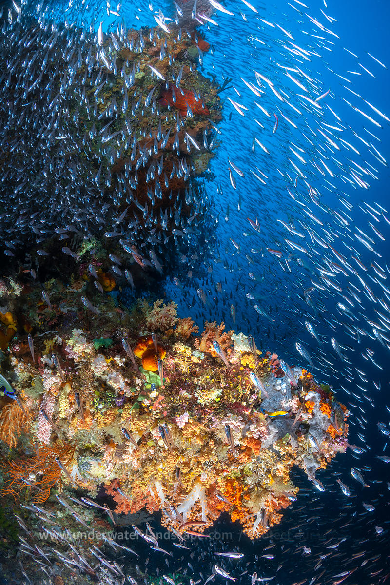 Underwater photo of Raja Ampat