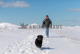 A rnewfoundland puppy running in the snow