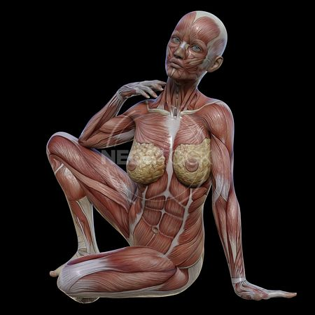 cg-body-pack-female-muscle-map-neostock-34