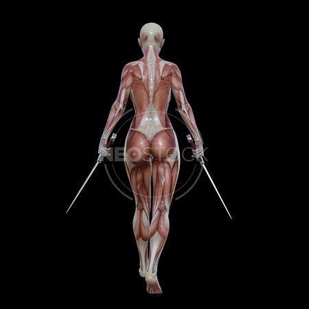 cg-body-pack-female-muscle-map-neostock-14