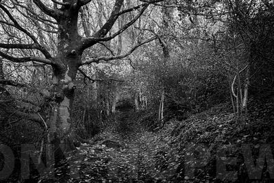 small_Holloways_and_Tramways-1000787