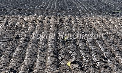 Newly ploughed grassland, ready for reseeding. Sedbergh, Cumbria, UK