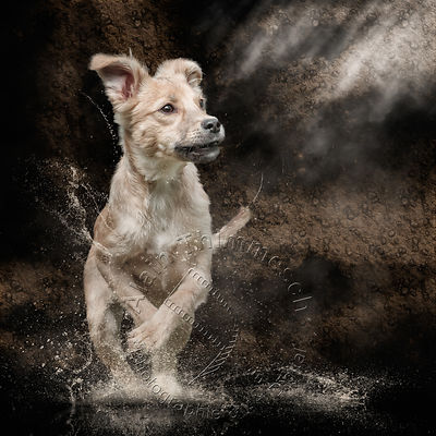 Art-Digital-Alain-Thimmesch-Chien-871
