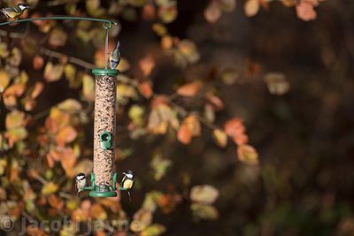 The One two port seed feeder