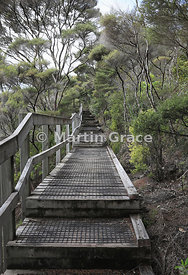 Boardwalk to summit viewpoint of Rangitoto Island, Hauraki Gulf, Auckland, North Island, New Zealand