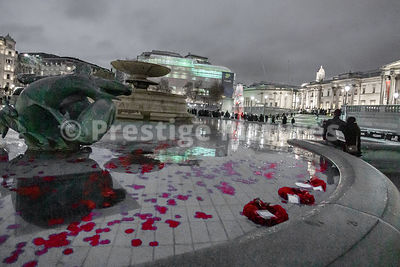 Poppy Wreaths Floating in a Trafalgar Square Fountain by the EVERY MAN REMEMBERED Sculpture at Night