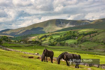 RAVENSTONEDALE 26A - Fell ponies and the Howgills