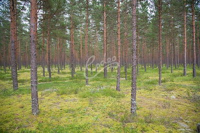 Forestry or forest