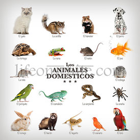 poster of pets in Spanish