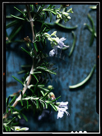 Rosemary by Court