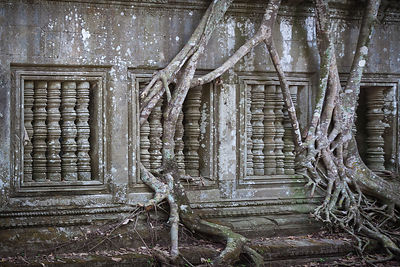 After hundreds of years jungle vegetation takes over and invades the ancient Khmer Angkor style teemple of Beng Mealea, Cambo...