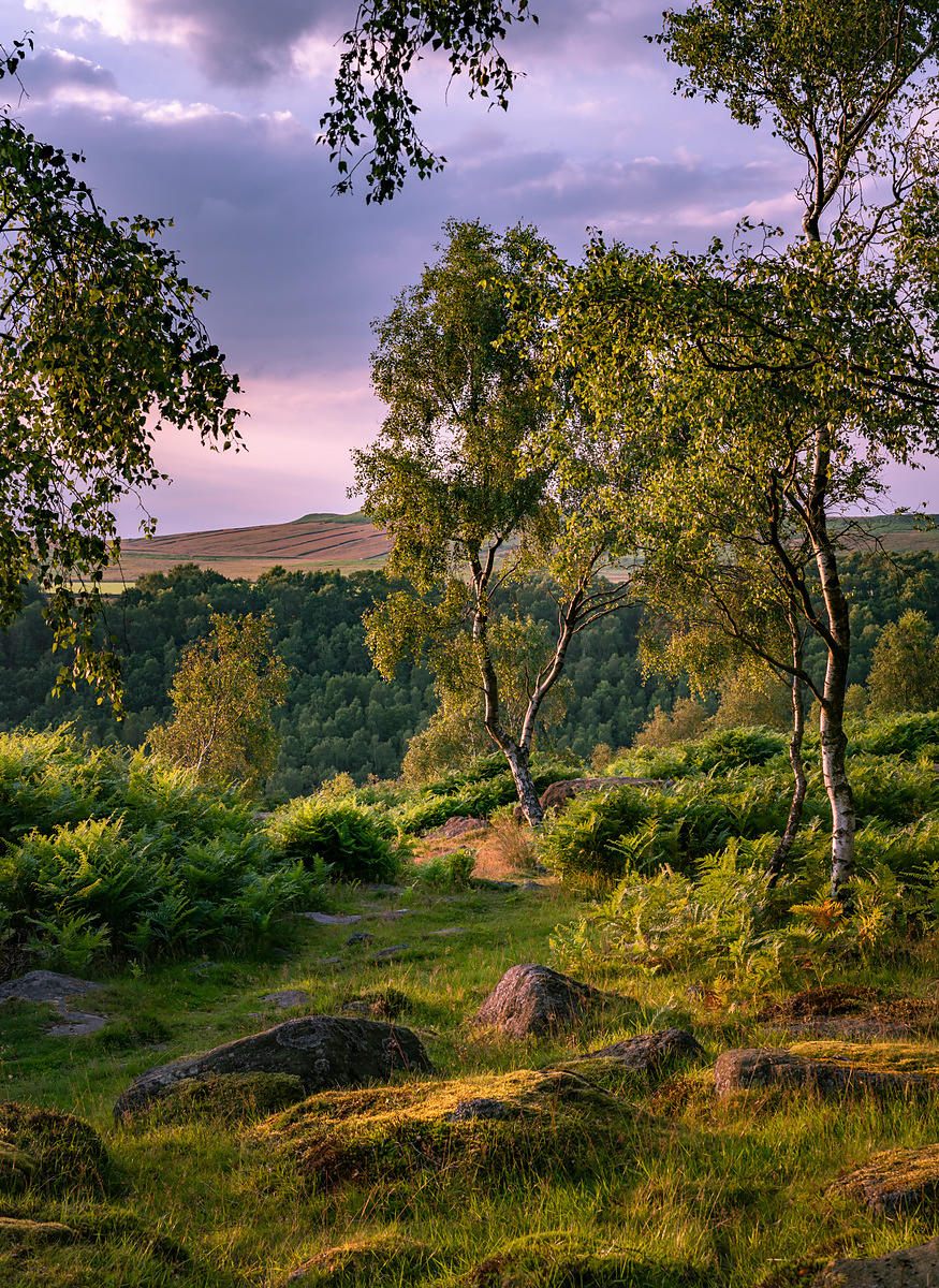 Silver birch on Gardom's Edge | Peak District photography