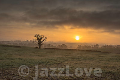 Sunrise over foggy field with tree.