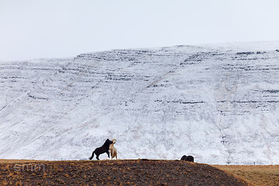 Hesta_fundur_-_horse_meeting_Iceland_emm.is-2