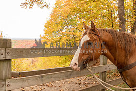 A horse in front of a scenic overview in fall
